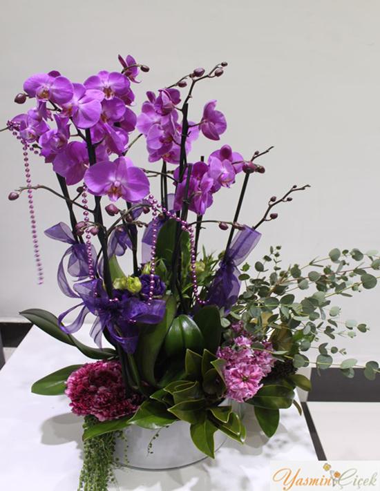 Seramik Saksıda Fuşya Orkide