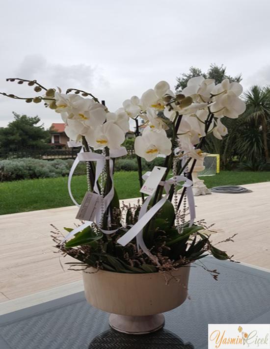 Seramik Saksıda Çok Dallı Beyaz Orkide