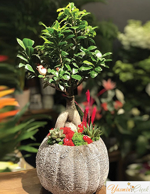 Japon Mini Ağaç Bonsai